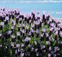 sun. sea. lavender Sticker