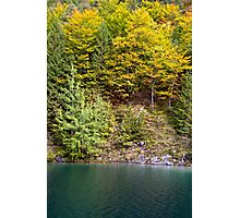 Fall Colors Photographic Print