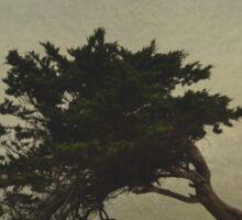 Lina's Tree Sticker