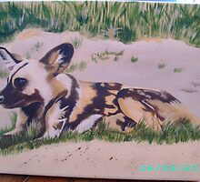 African wild dog. by dinky