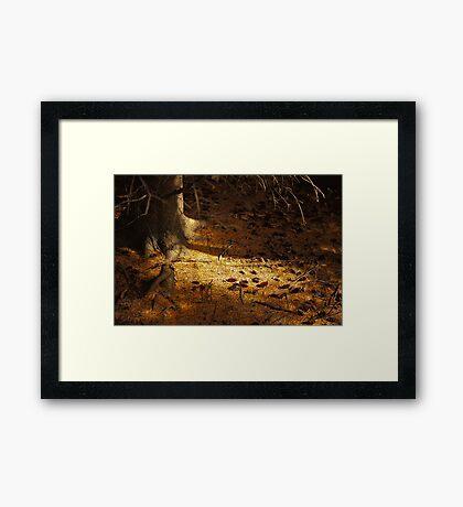Among the Pines Framed Print