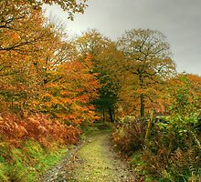 The Colours of Autumn-Finsthwaite Bridleway by VoluntaryRanger