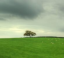 Farewell To Finsthwaite by Jamie  Green