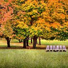 Autumn In The Park by Pat Abbott