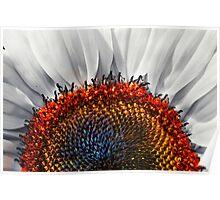 Sunflower, redux! Poster