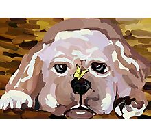 A Lab puppy Photographic Print
