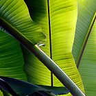 Green by Tony Roddam