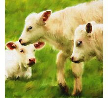 """White Calves"" Photographic Print"