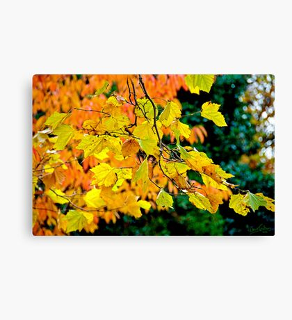 Colours of the Trees Canvas Print