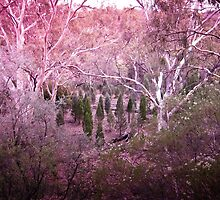 Pink Forest by DVJPhotography
