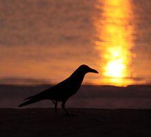 zanzibari sunrise stroll by Iris MacKenzie