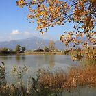 Quiet autumn by annalisa bianchetti