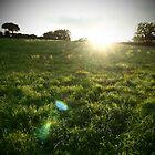 Irish fields by nickilalala