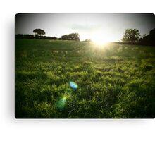 Irish fields Canvas Print