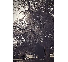 as if it were enough that trees were in the world. Photographic Print