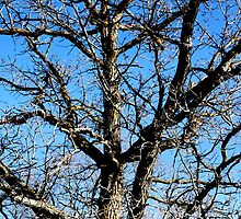 A Tangle of Branches by Debbie Pinard