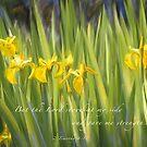 Iris Yellow by JulieLegg