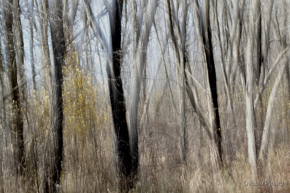 Fall Forest by Debbie Pinard