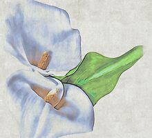 Precious Lily by elenimac