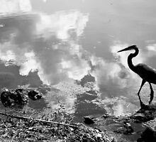 Birdy in Muddy Waters by Christopher Boscia