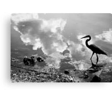 Birdy in Muddy Waters Canvas Print