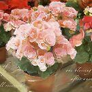 Begonias by JulieLegg