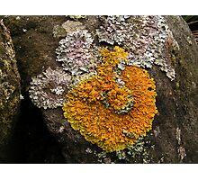 Lichen on the Rocks Photographic Print