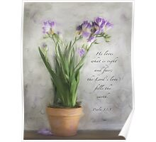 Freesia Purple Poster