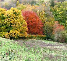 Autumn Palette by Braedene