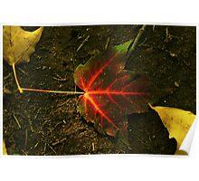 """Autumnal Burn"" Poster"