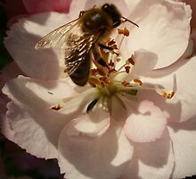 Busy Bee number 2 by Shelleymay
