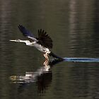 Landing Gear Down by JayWolfImages