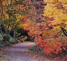 autumn woodland 2 by purpleminx