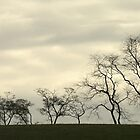Waltzing Trees by RockyWalley
