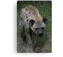 Spotted Hyena Canvas Print
