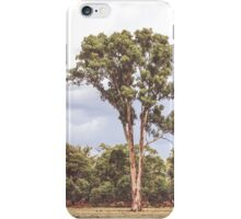 Stately Eucalyptus Tree iPhone Case/Skin