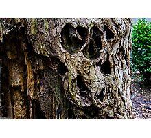 Tree skull Photographic Print
