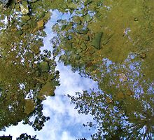 Reflections - Earth, Sky, Water  by Terry L. Gayhart