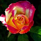 A Rose Is A Rose by Loree McComb