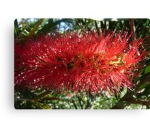 Red Bottle Brush 2 Canvas Print