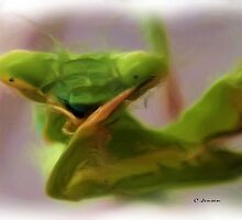 Praying Mantis by Carla Jensen