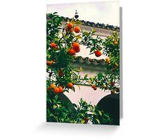 Seville Oranges Seville Spain Greeting Card