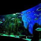 Aquarium Curves  by Michelle Crouch