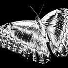 Butterfly by Dawn B Davies-McIninch