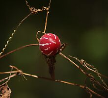 Beauty in the Dry by Karue