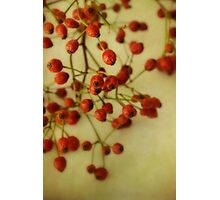 Rose Hips Photographic Print