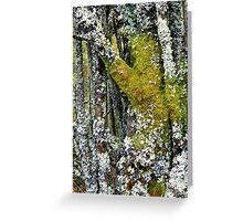 Mossy tree at Alwen Greeting Card
