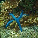 Starfish by Jason Ruth