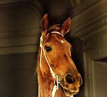 PHAR LAP- LEGEND... by Helen Akerstrom Photography