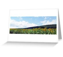 A Field of Sunflowers in Pennsylvania Greeting Card